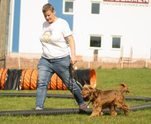 Longieren mit dem Hund