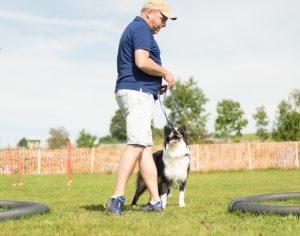 Kreiswechsel beim Longieren mit dem Hund