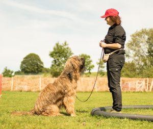 Starten beim Longieren mit dem Hund